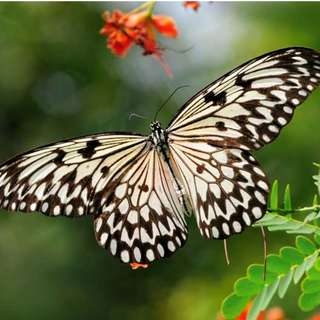 Live Butterflies for Wedding, Birthdays, Funerals, Any Event