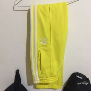 Adidas 黃色 運動褲 三葉草