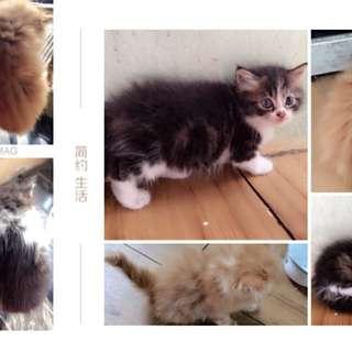 Lepas Kucing 1.5bln