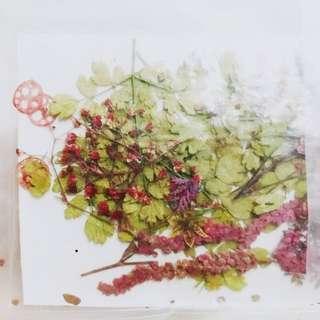 含運 乾燥花 書籤 手札 手作 花朵 小花 小草