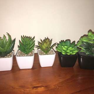 Various Fake Succulents