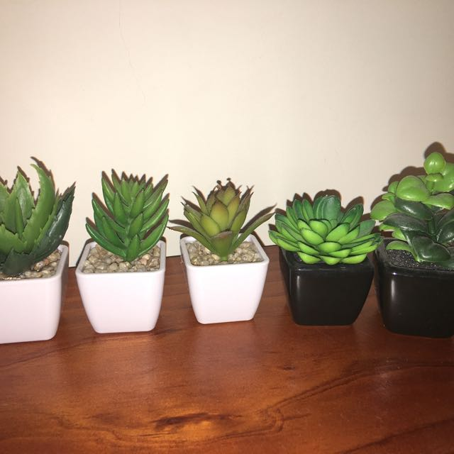 Various Fake Succulents