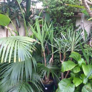 Xx Large-small Outdoor Indoor Cheap Plants