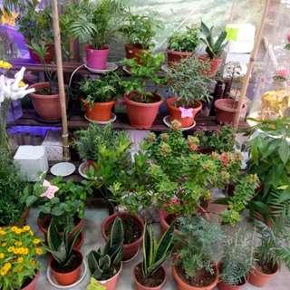 Raw Plants - Indoor And Outdoor