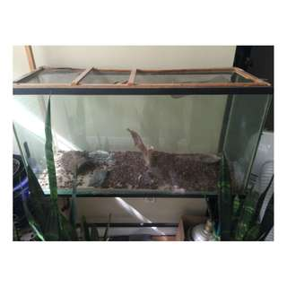 35 Gallon terrarium / Fish Tank With Stand
