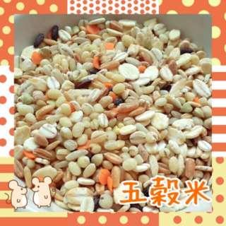 倉鼠主食配料~五穀米100g
