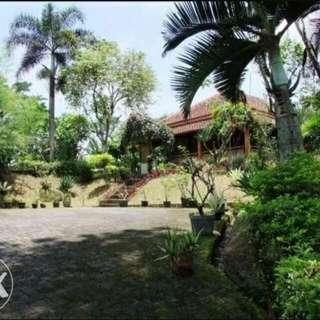 Rumah Kebun Asri Di Kampung Pancawati Bogor