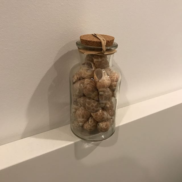 Shells in glass bottle