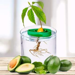 Customized Avocado Seed Planters
