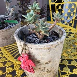 Beautiful Succulent Feature
