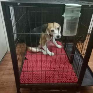 Dog Cage With Red Matting