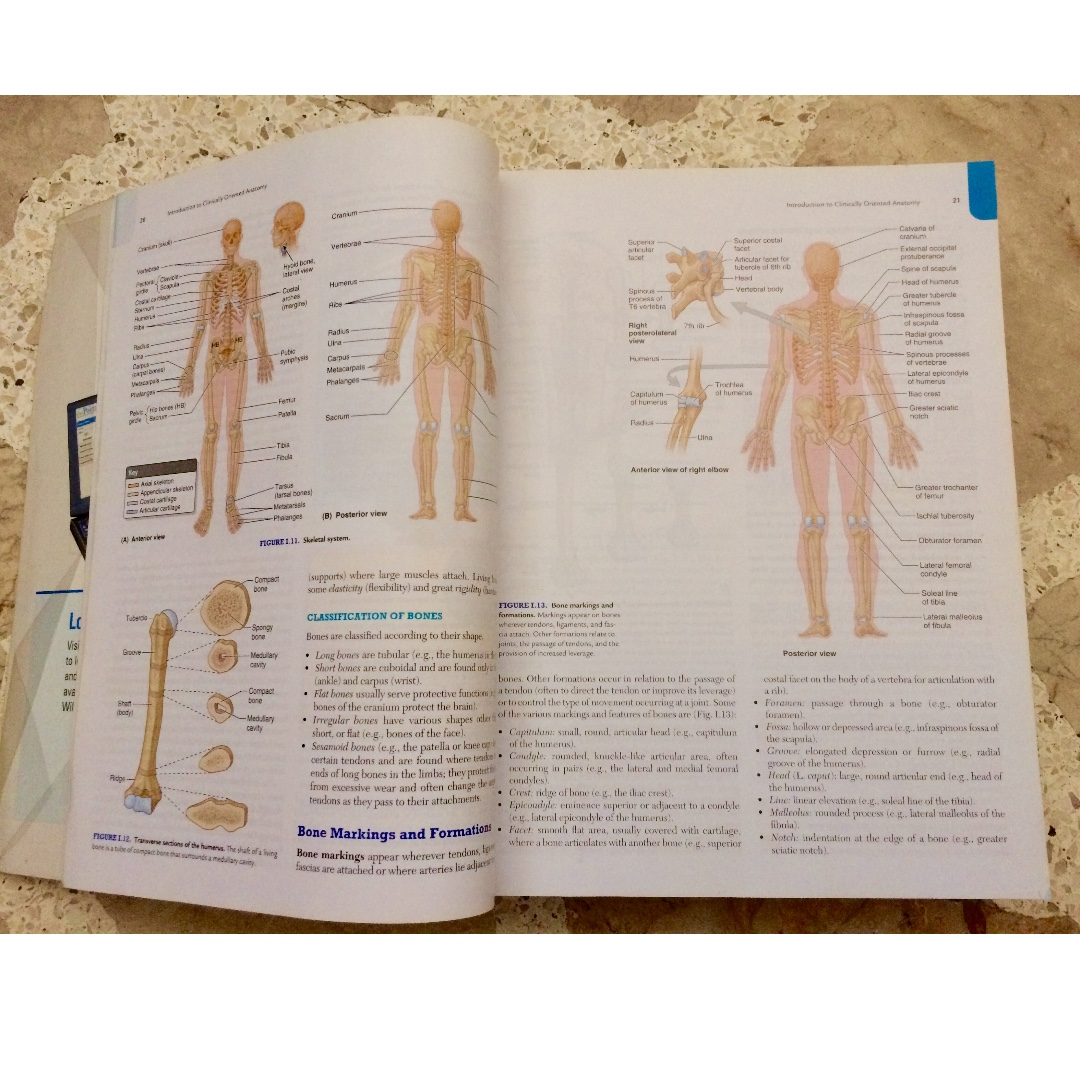 Clinically Oriented Anatomy 7th Ed. by Moore, Textbooks on Carousell