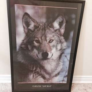 Gray Wolf Framed Picture