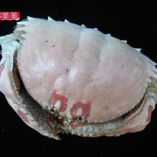 饅頭蟹標本螃蟹標本非保育類可做擺飾孩童教育學校海洋生物螃蟹迷收藏品教材之用價格含運