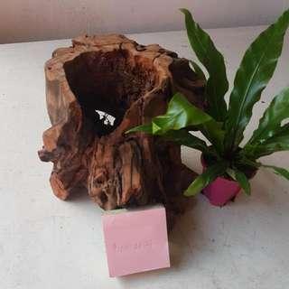 Natural Wood Planter/Deco