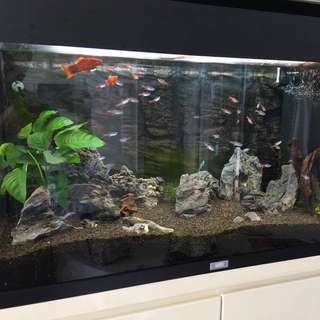 魚缸連魚連配件全套