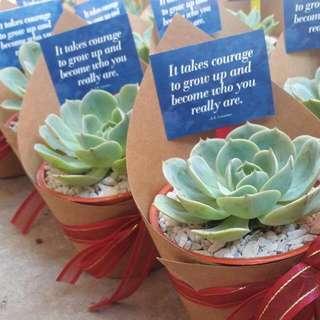 Affordable Succulent Souvenir