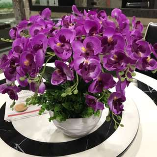 Beautiful Purple Orchid Flower With Vase