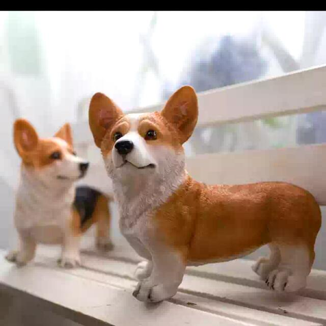 黃色科基犬