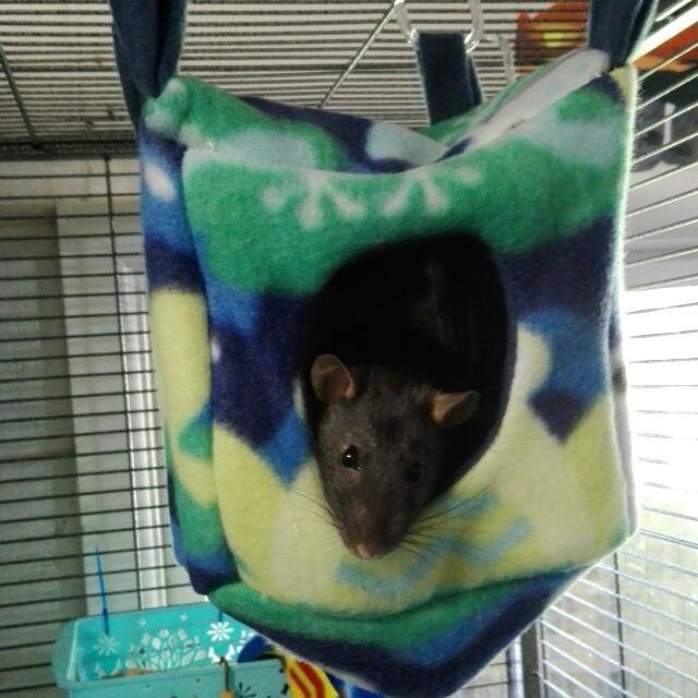 Small Animal Hammock Set