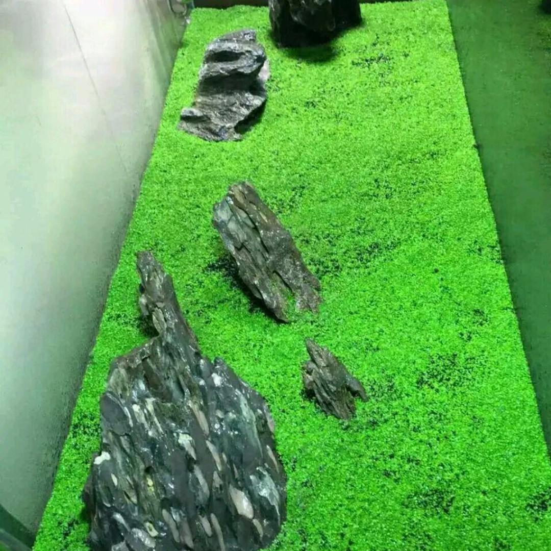 Magic Carpet Seed Aquarium Plant 7g Pet Supplies Lampu Uv Light Yang 15w Accessories On Carousell