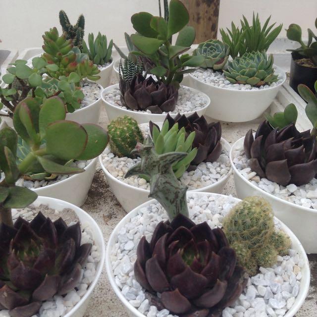 Succulents Dishgarden