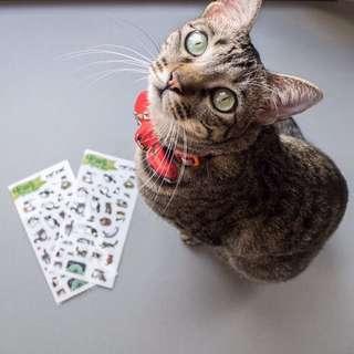 Korean Cat Stickers