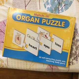 Educational organs Puzzle