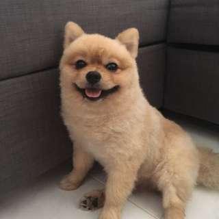 Dog Walker in Pasir Ris Area