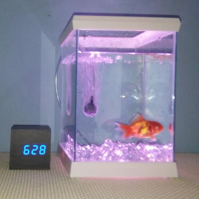 fishland aquarium mini/negotiable
