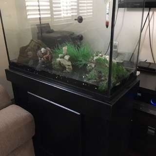 40 Gallon Fish Tank Eithpefes