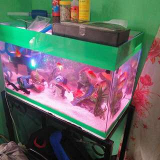 15 Gallon Aquarium