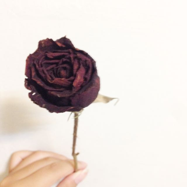 乾燥花酒紅玫瑰