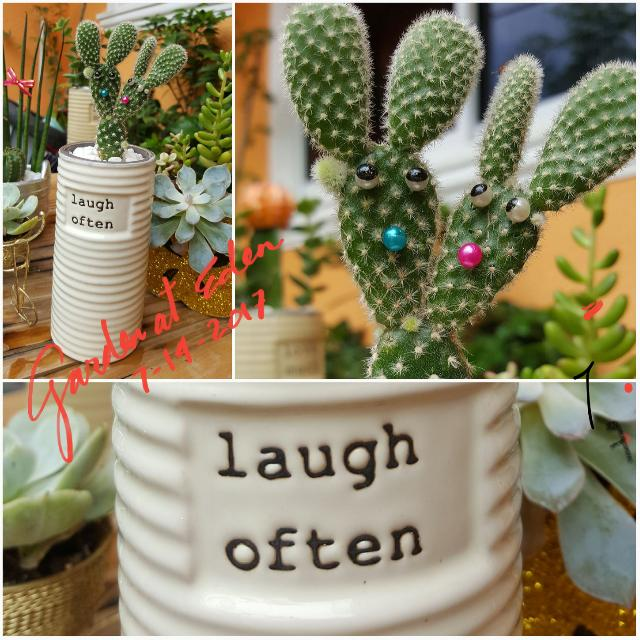 Designed Bunnys Ear Cactus W Vase Laugh Often