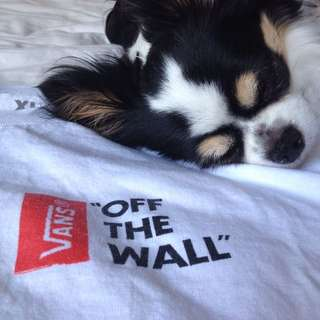*REDUCED* Vans Off The Wall T Shirt