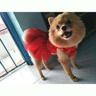 Red Tutu Qipao Dress for Dogs
