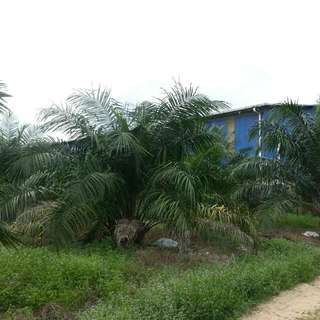 2Acre Land @New INDUSTRIAL ZONE