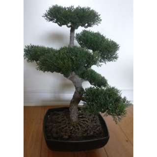 Bonsai tree (artificial)
