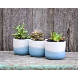 Set of Three Mini White Ceramic Blue Ombre Dip Dyed Planters
