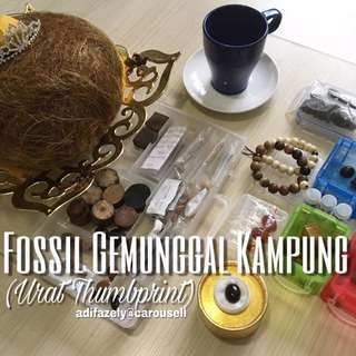 Fossil Gemunggal Kampung (Urat Thumbprint)