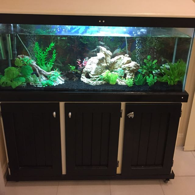 4ft Tank With The Lot And Extras