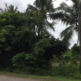 20+ Hectares Lot @ Amadeo