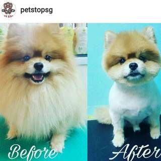 Professional Pet Grooming/Styling/Spa