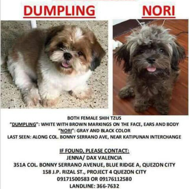 MISSING DOGS!