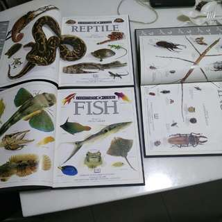 Eyewitness Guides No 17,20 & 26 Insect, Fish And Reptile