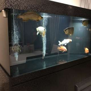 6ft fish tank with cabinet