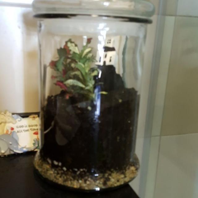 Christian Theme Terrarium (Open Or Closed) Free Delivery Above $150
