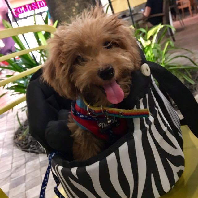 Dog/Cat Bag 💕