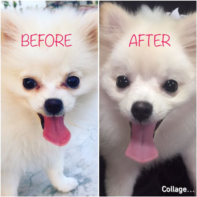 Image result for eyevita before and after