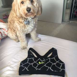 Nike Pro Sports Bra Size S DOG NOT INCLUDED